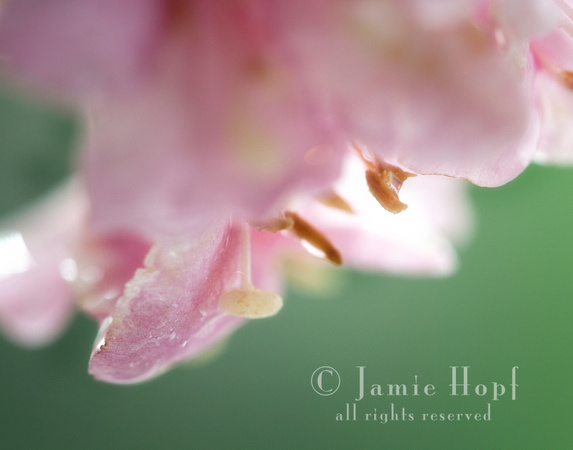 Fine Art Floral and Macro Photography