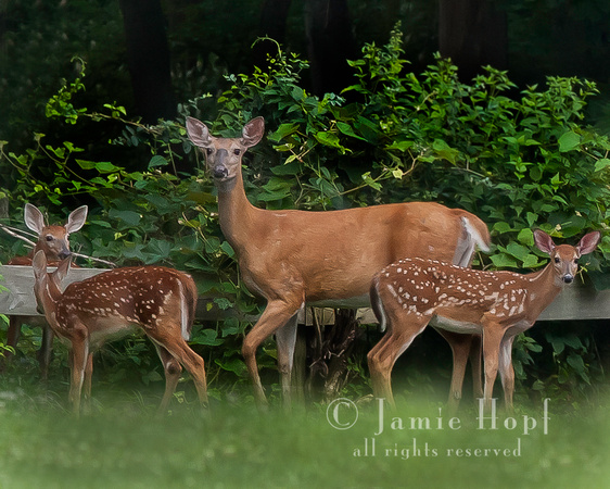 Fine Art Wildlife and Nature Photography